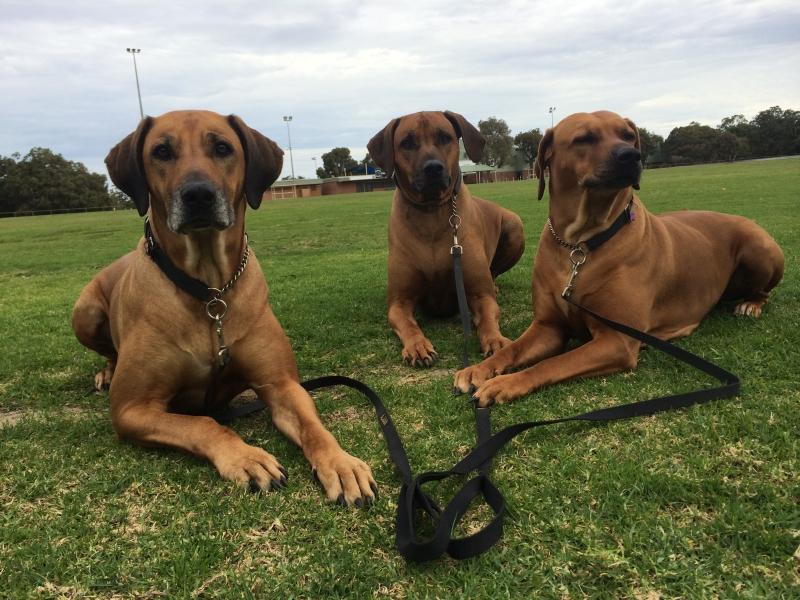 Dog Walking Prices Perth